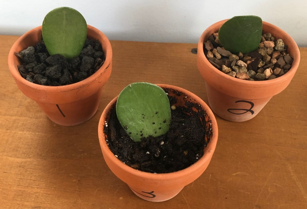 All three plants with wet soil
