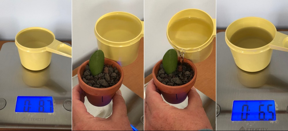 Water amount before and after watering plant number 1