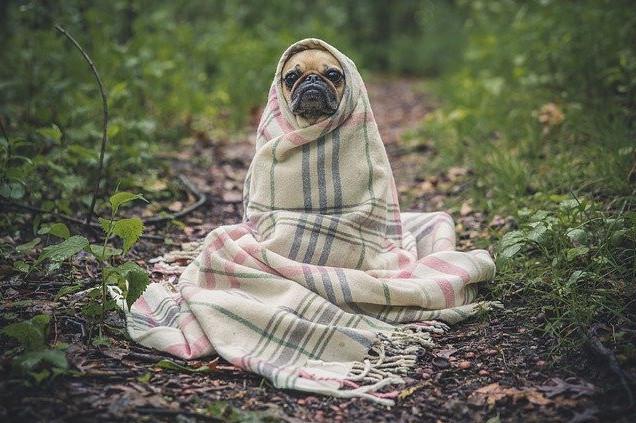 practice picture description ESl dog in blanket