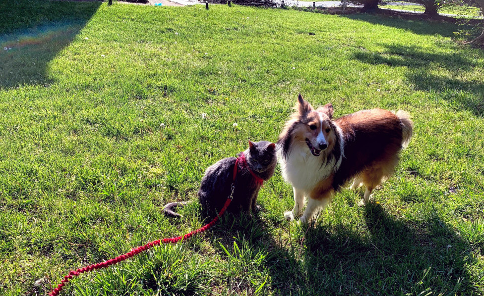 Cat and Dog Best places to take your Dog In Virginia