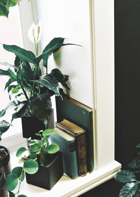 Books and plants occupy a sunny window sill.