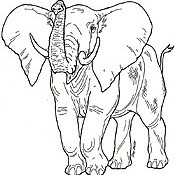 virtual trip to africa for homeschoolers - elephant coloring page