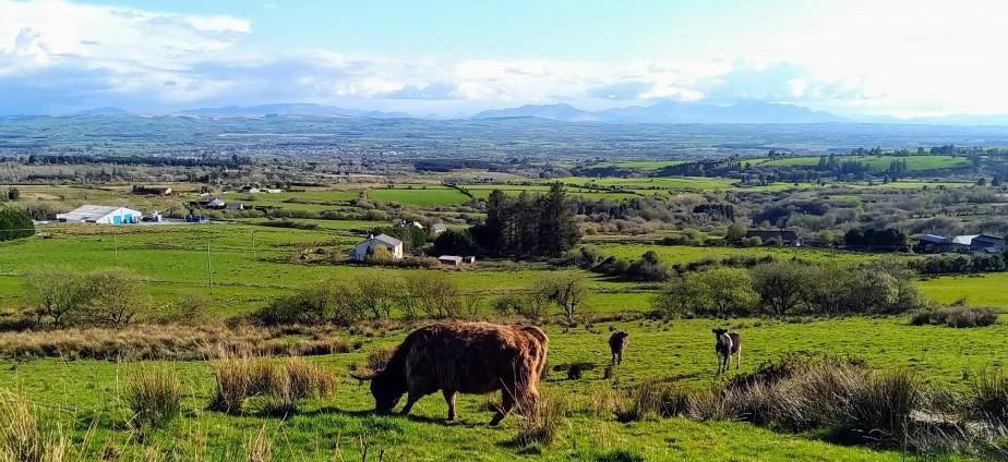 highland at blackfieldfarm.com
