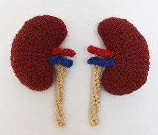 The Kidneys Crochet Pattern