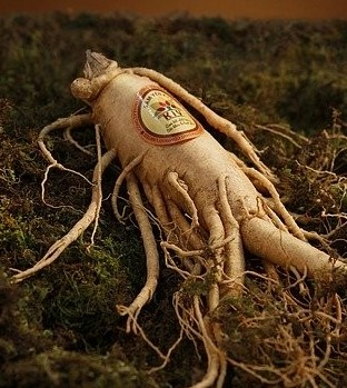 ginseng for skincare