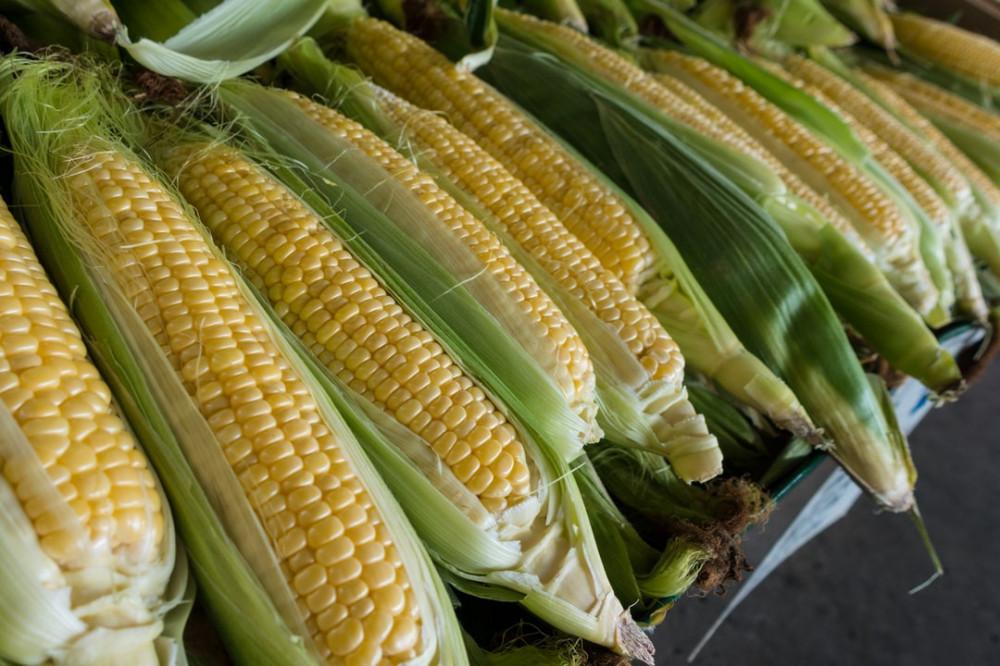 Corn on the Cob: Cool Gadgets Edition