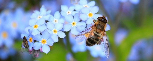 Bees collect nectar from flowers and other plants - How is Honey Made? The Buzz About Honey