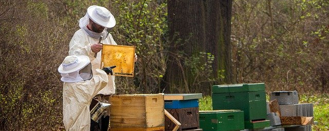 Is taking honey from bees wrong? - How is Honey Made? The Buzz About Honey