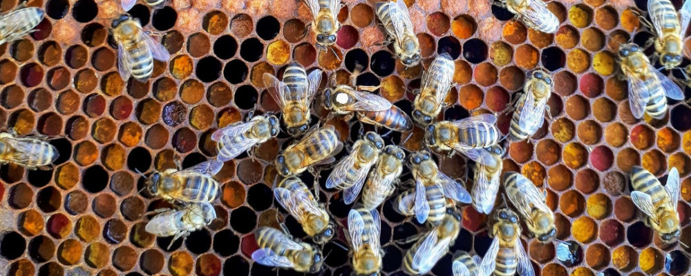 It is possible to remove honey without hurting bees - How is Honey Made? The Buzz About Honey