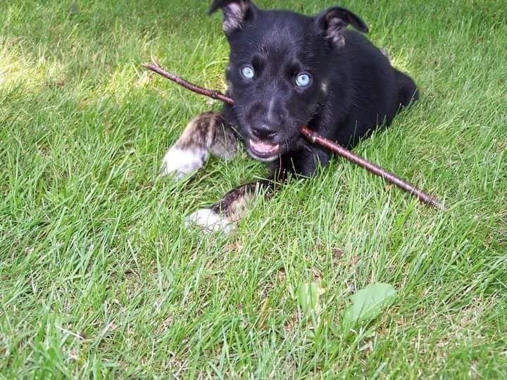 Grieving Dog Loss - puppy Buddy