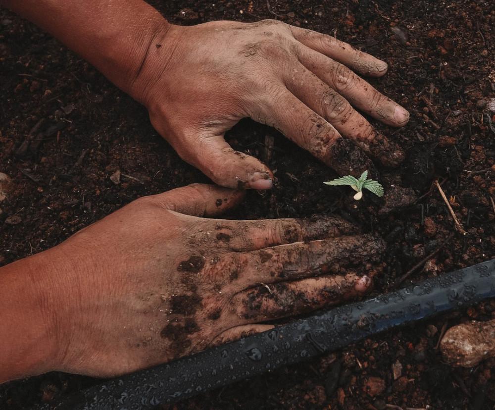 Vegetable Gardening In Canada - planting