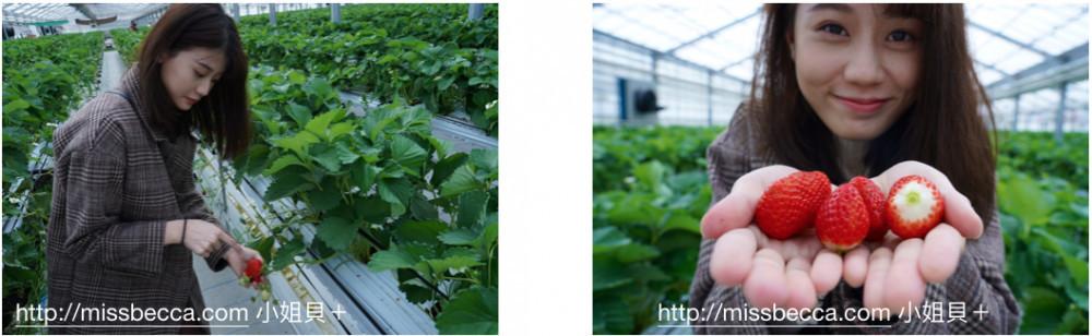 沖繩自由行美麗草莓園