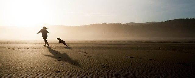 dog friendly beaches in Norfolk - Header