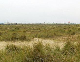 dog friendly beaches in Norfolk - Great Yarmouth