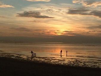 dog friendly beaches in Norfolk - Snettisham Beach