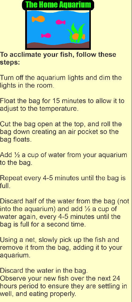 How to acclimate your new fish into you new fish tank