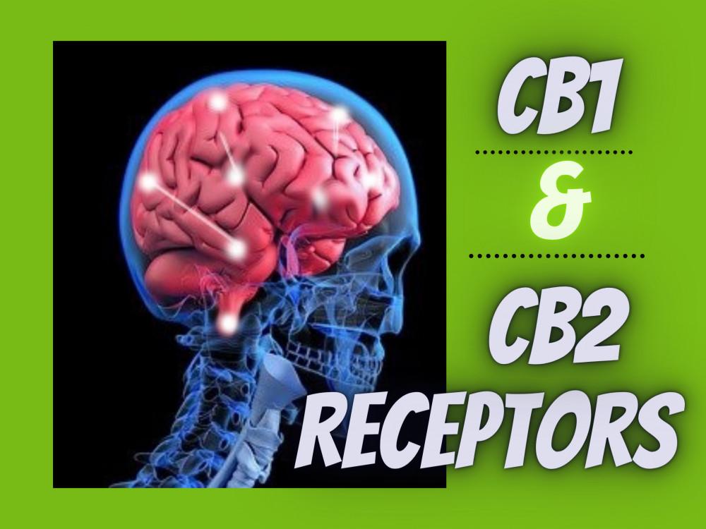 CB1, CB2 receptors
