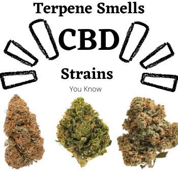 what are terpenes in CBD