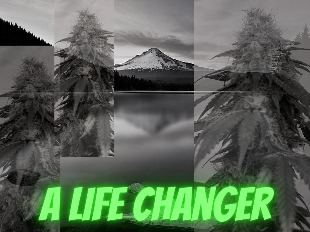 How CBD Changed My Life