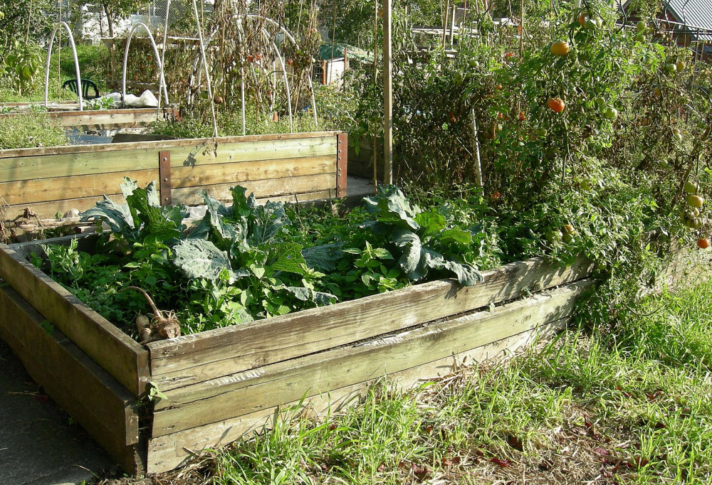 raised garden bed made with wood
