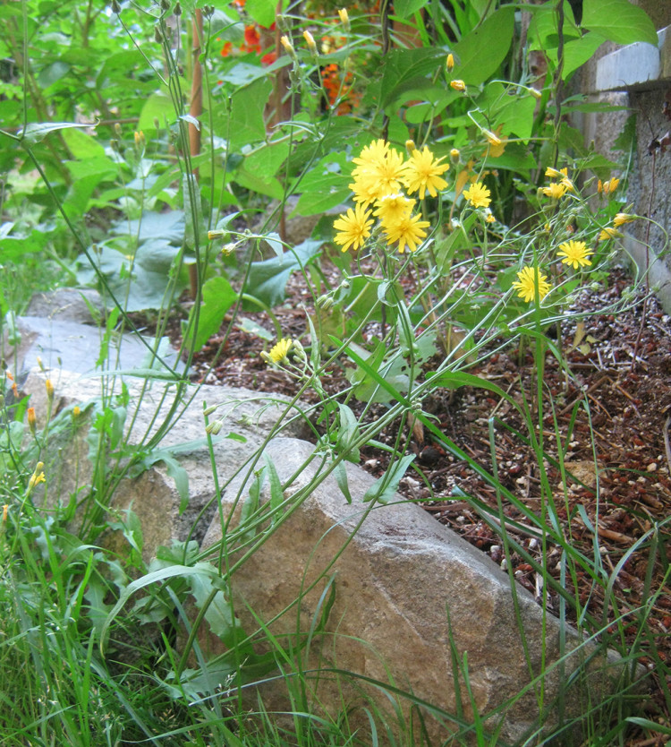 weeds: good for soil
