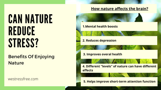 How nature affects the brain?