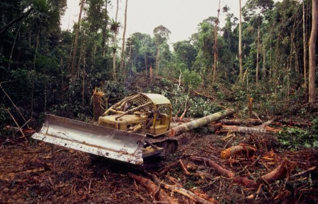 What is plant based food - deforestation