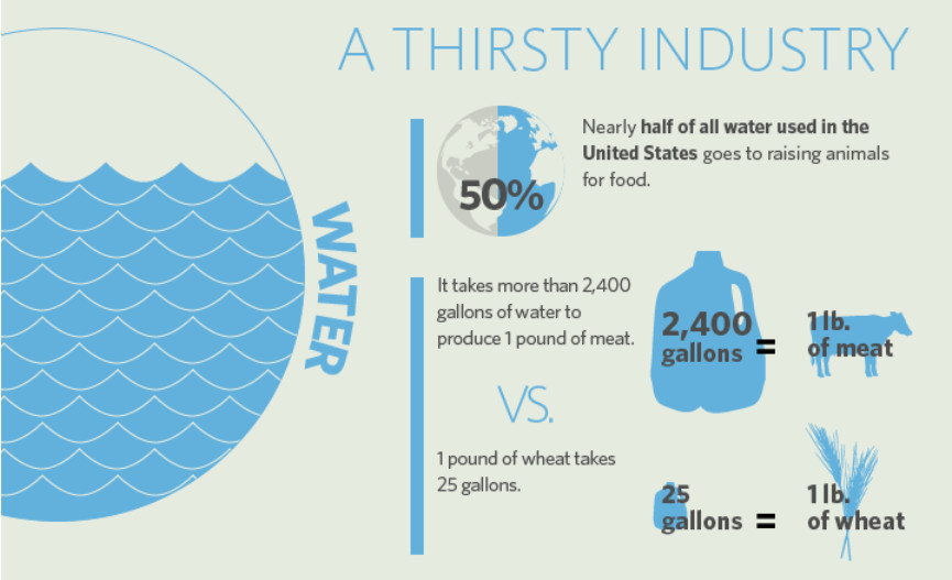 What is plant based food - water usage