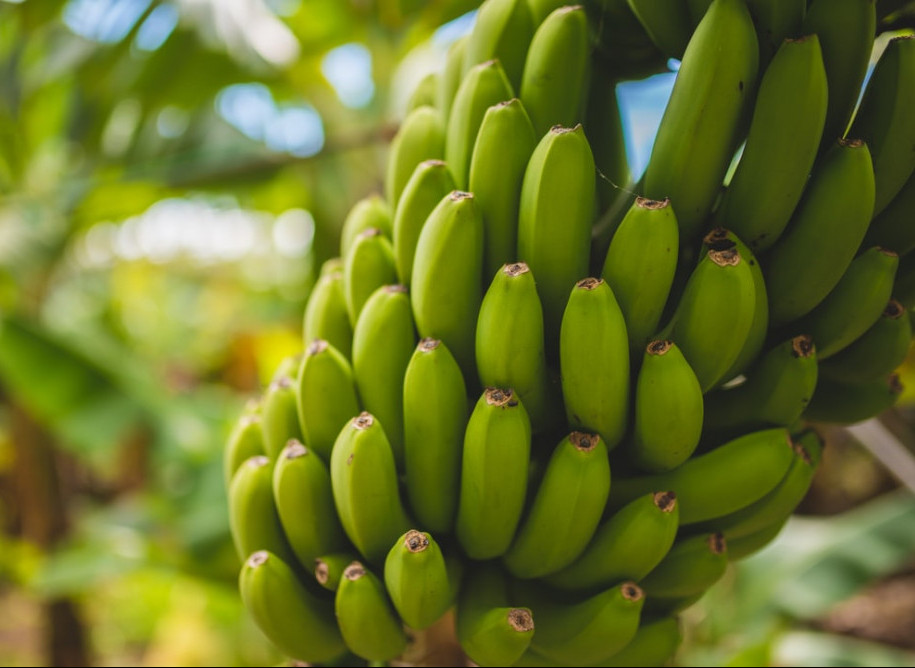Calories in Banana - green bananas
