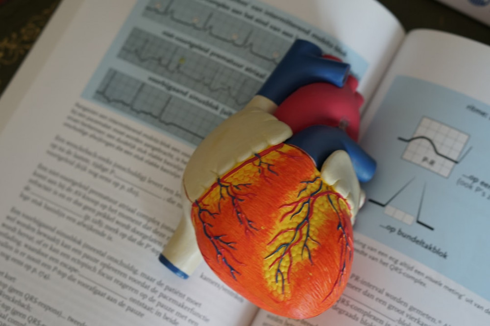A plastic medical heart on top of a text book