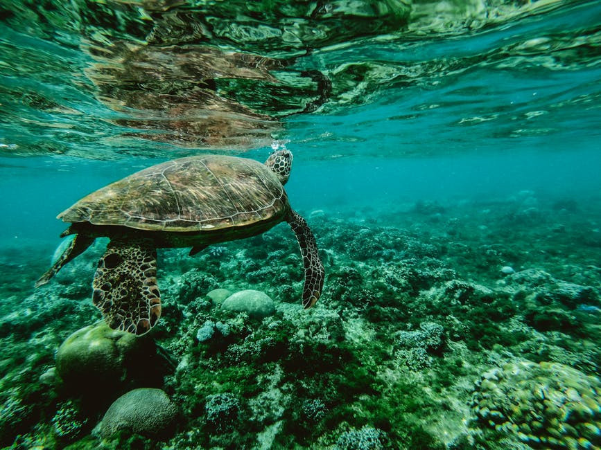 A sea turtle swimming among coral reef