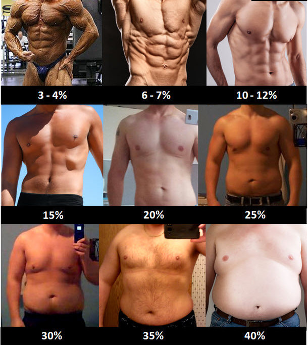 Body Fat Percentages For Men