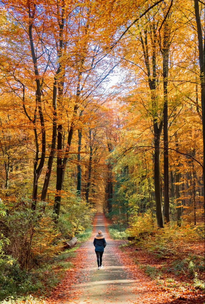 A Person Walking Along a Path in a Wooded Area