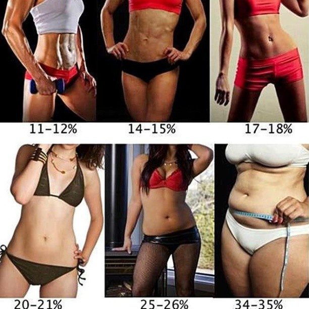 Body Fat Percentages For Women