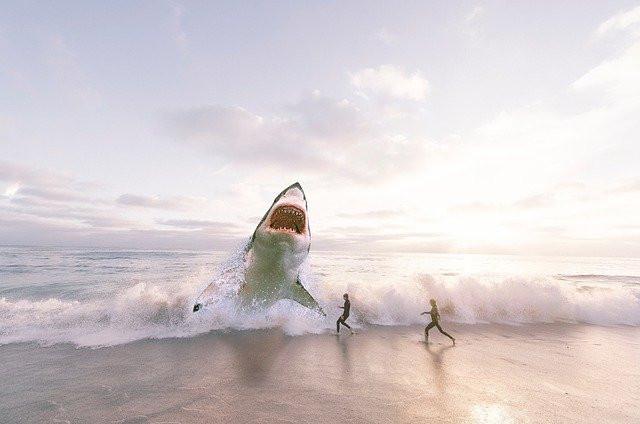 Navy Seals Workout Secrets Revealed ! swim with sharks