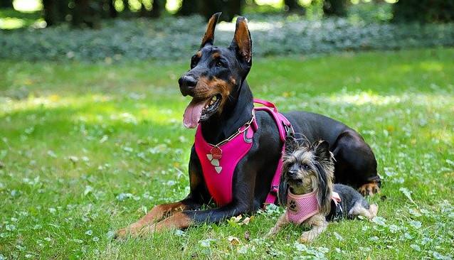 dog car harness safety