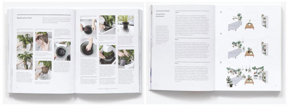 The New Plant Parent book   Your Casa Concept