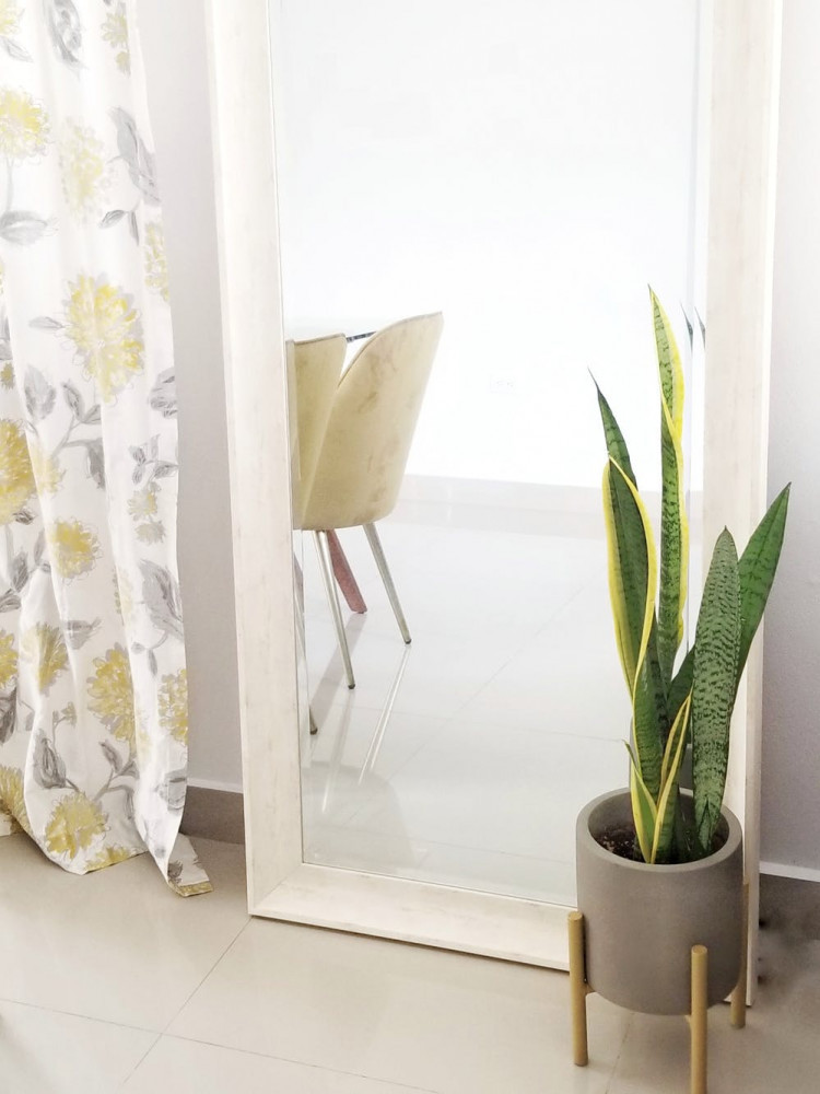 Snake Plant indoor plant | Your Casa Concept