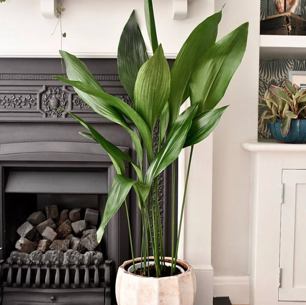 Cast Iron Indoor Plant | Your Casa Concept
