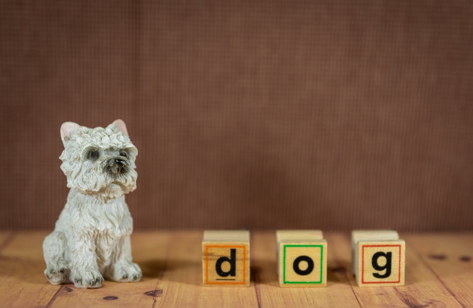 how-many-words-can-dogs-learn-dog-letters