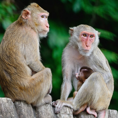Beleifs System can be demonstrated by chimps