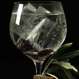 Alcohol Gin and Tonic