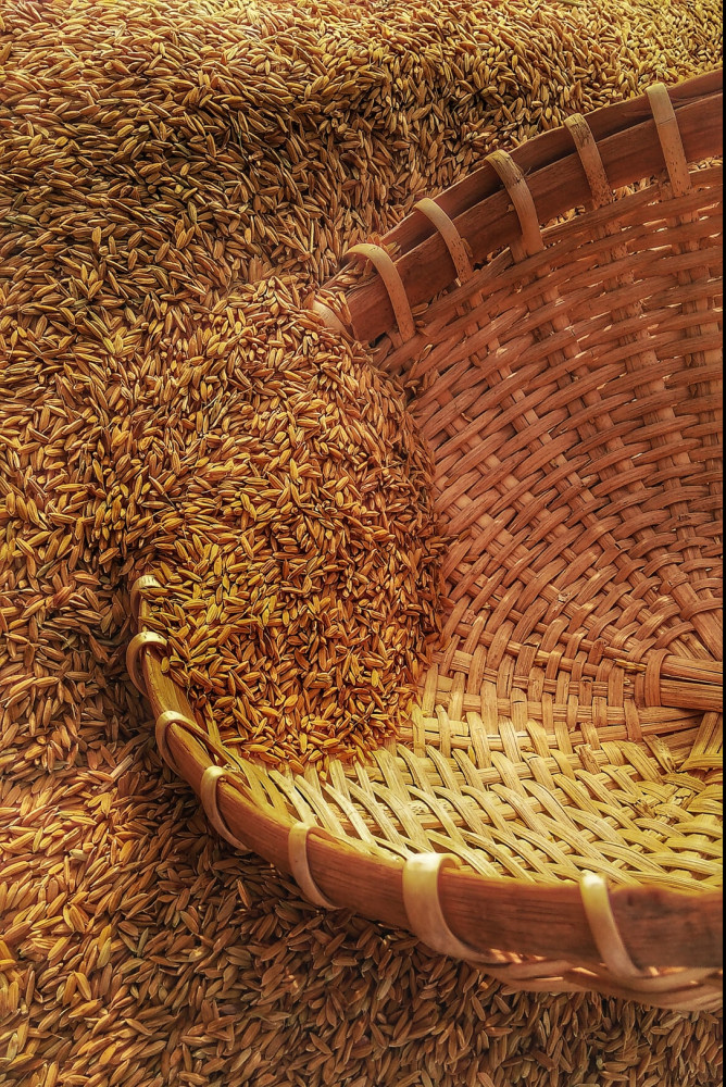 Harvested Grains in a Basket