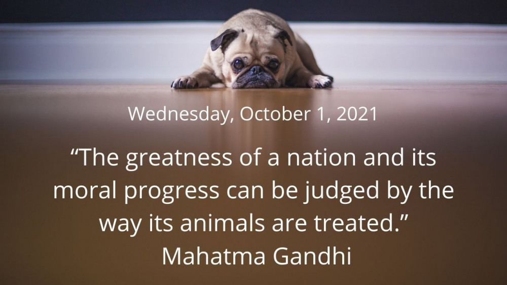 Quote for October 1