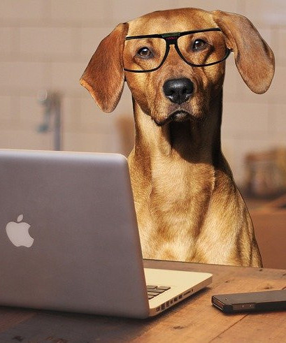 A dog wearing glasses sitting on a chair asking Who will read my blog?