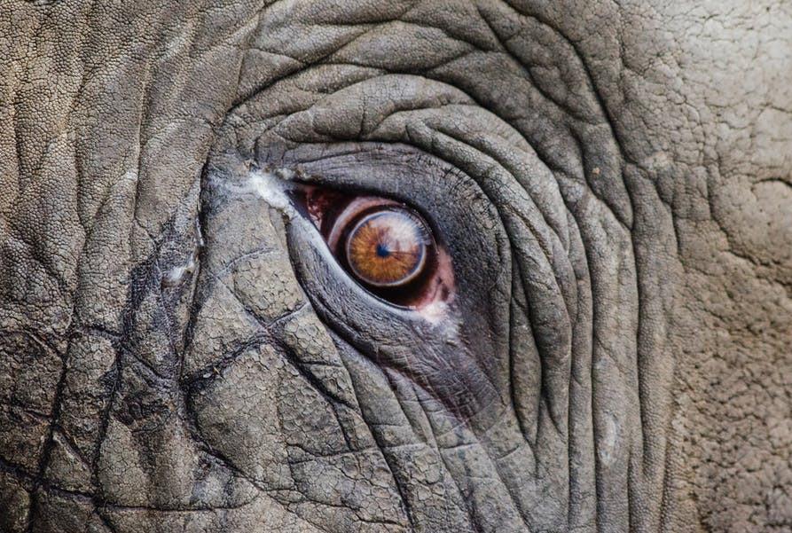 lifeism - elephant
