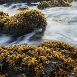 seaweed at the coast