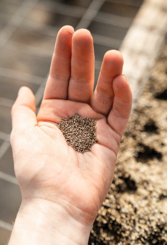 seeds in a left hand of a man