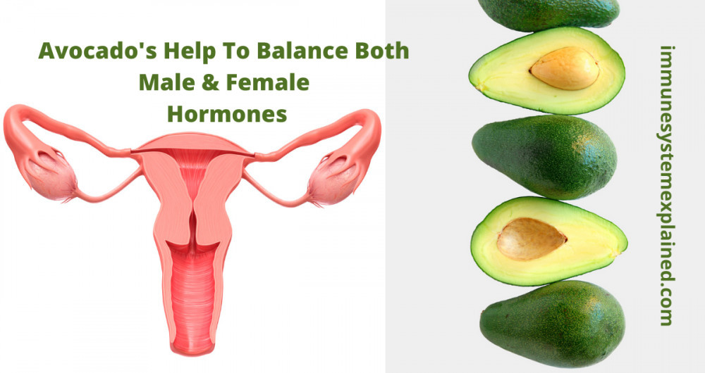 avocados-helps-balance-both-male-and-female hormones