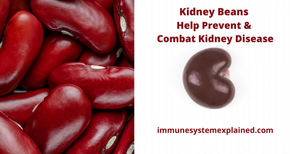 kidney-beans-help-prevent-and-combat-kidney-disease